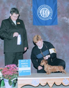 Knight's Kiss Me Kate MW. AKC Champion 2006